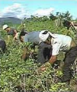 """""""The main part of the harvest served as the main income of the poorest people in Bolivia"""""""